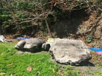 20210315_ロース岩の亀.jpg