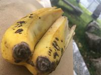 20210502_双子ちゃんバナナ.jpg